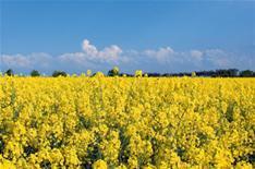 Biofuel development put on hold