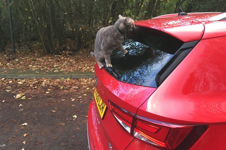 Cat likes rear spoiler of a Seat Ateca
