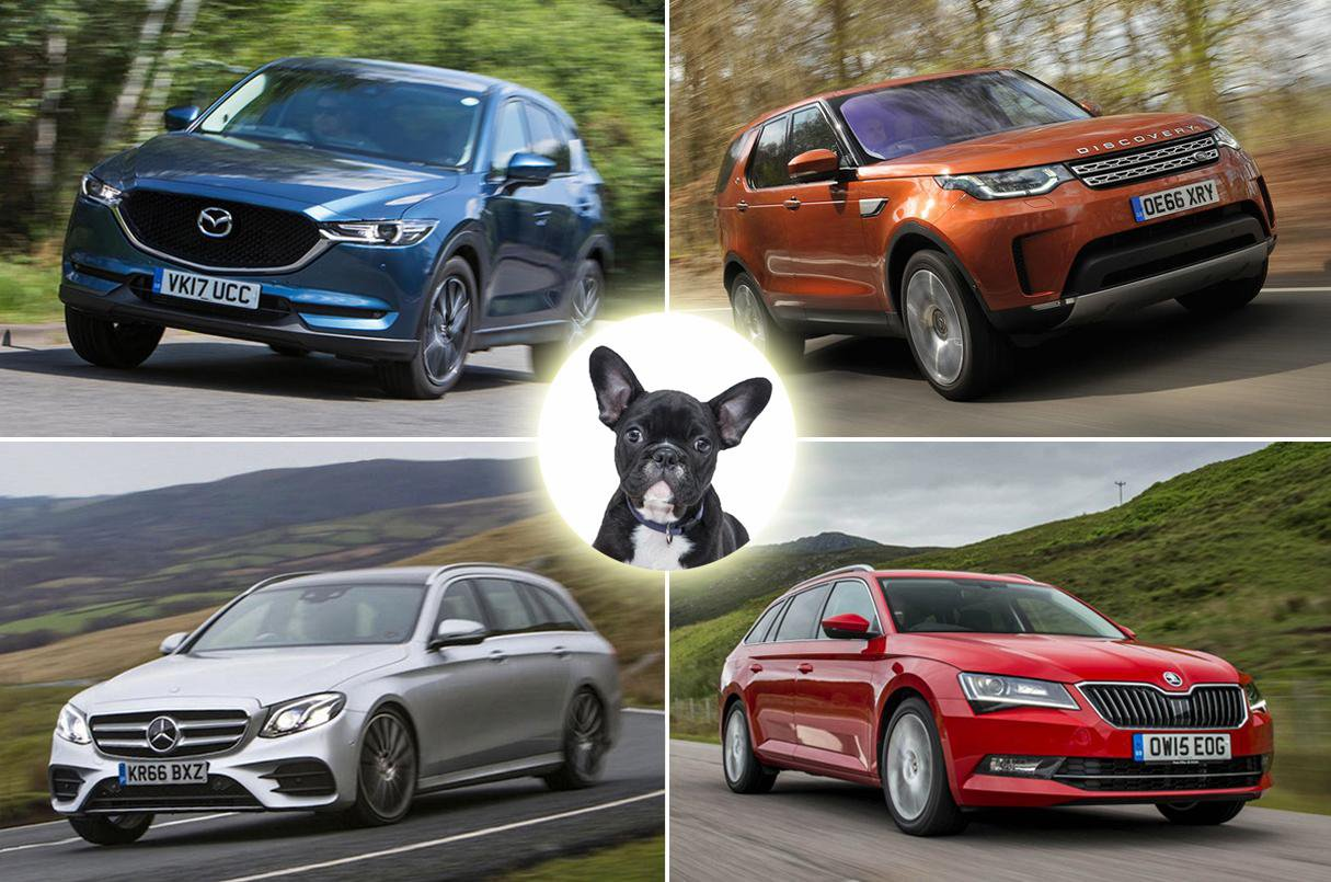 Best cars for dog owners