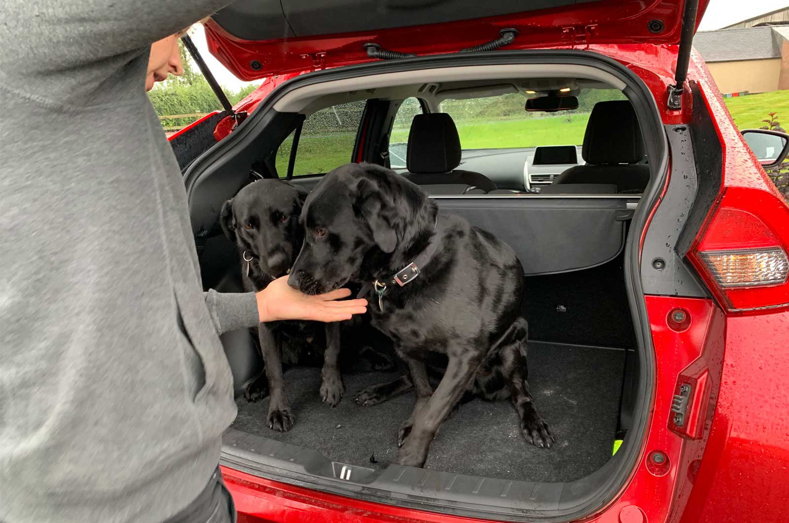 Dogs in a Mitsubishi Eclipse Cross