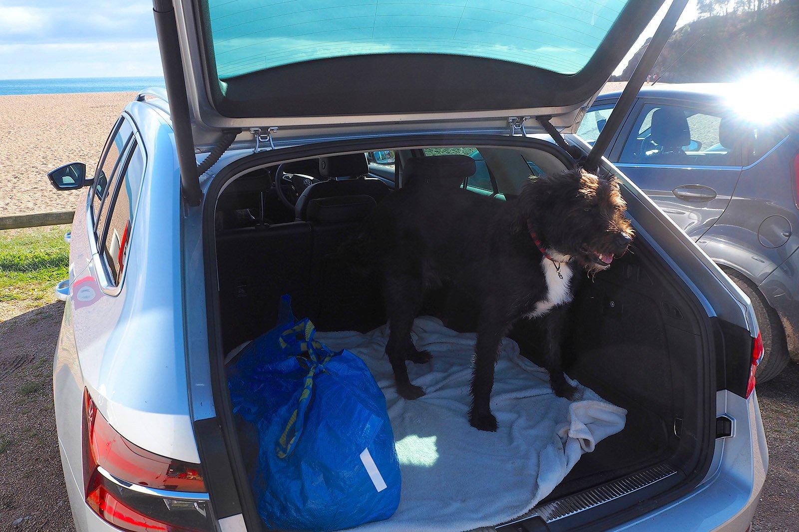Skoda Superb iV plug-in-hybrid Long Term canine cargo