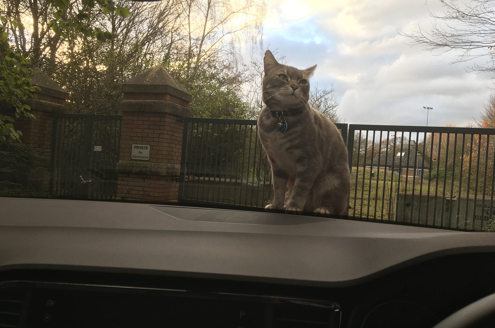 Disgruntled cat on the bonnet of a Seat Ateca